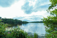 弗吉尼亚紫色花湖 库存图片