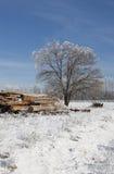弗罗斯特包括在一个冬日的结构树。 免版税库存图片