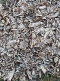弗罗斯特在一个早期的秋天早晨盖了叶子 库存照片