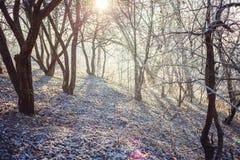弗罗斯特在森林里 免版税库存照片