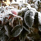 弗罗斯特在植物的秋天 库存照片
