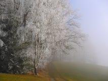 弗罗斯特在瑞士阿尔卑斯的森林里 免版税库存照片