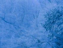 弗罗斯特在瑞士阿尔卑斯的森林里 免版税库存图片