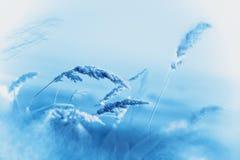 弗罗斯特在草甸-冬天来 库存图片