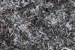 弗罗斯特报道了Bladderwrack海草背景 免版税库存照片