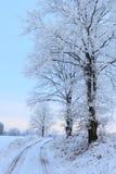弗罗斯特树在冬天 免版税图库摄影
