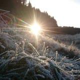 弗罗斯特植物和太阳 图库摄影