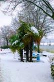 弗罗斯特涂上了加拿大棕榈树 免版税库存照片
