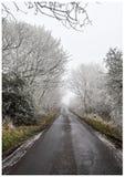 弗罗斯特盖了在路的树 免版税库存图片