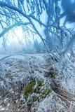 弗罗斯特结冰的树枝 免版税图库摄影