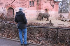 弗罗茨瓦夫动物园 库存照片