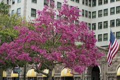 贝弗莉山庄洛杉矶房子 免版税图库摄影