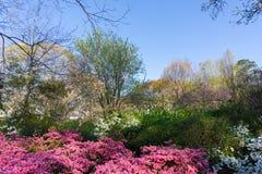 弗雷德弗莱彻公园在3月 免版税库存图片