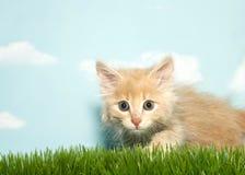 紧张的橙色小猫在草蹲下了 免版税图库摄影