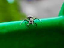张蚂蚁的嘴 免版税库存图片