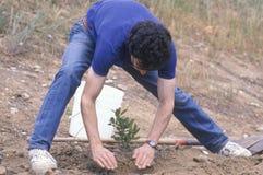 弯下来和种植一个小的结构树的一个人 免版税库存照片