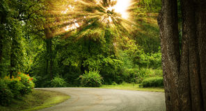 弯在森林里 免版税库存照片