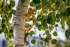 弯曲了与鲜绿色叶子的树干 图库摄影