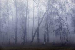 弯曲在一场被困扰的雾的树风 免版税库存照片