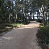 弯曲在湖旁边的道路 免版税库存照片