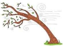 弯曲打破的分支的大风天树 免版税库存照片