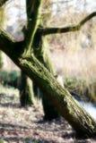 弯曲的公园结构树 免版税库存图片
