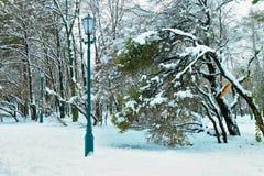 弯曲的和打破的树在降雪以后的市区公园  免版税库存照片