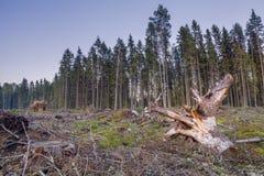 弯曲的断枝看法在击倒的树和分支中的 免版税库存照片