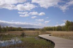 弯曲的木板走道通过沼泽 库存图片