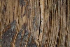 弯曲的木纹理背景的黑暗的垂直的关闭 免版税库存图片