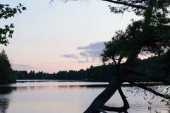 弯曲的树忽略桃红色日落 免版税库存图片