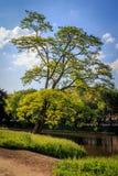 弯曲的树 免版税库存图片