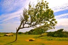 弯曲的树 免版税图库摄影