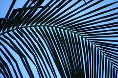 弯曲的棕榈叶状体创造抽象样式反对蓝天 免版税库存图片