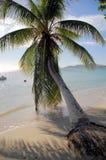弯曲的棕榈树 库存图片