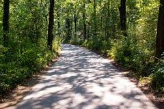 弯曲的森林公路 库存照片