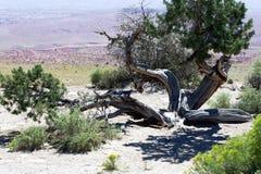 弯曲的沙漠 图库摄影