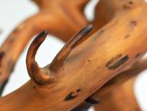 弯曲的结构树 库存照片