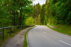 弯曲的街道在没有人,汽车的绿色森林里 免版税库存图片