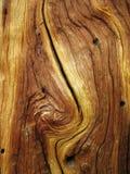 弯曲的谷物木头 库存照片
