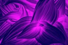 弯曲的霓虹留下抽象纹理 r 皇族释放例证