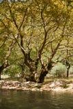 弯曲的结构树 免版税库存照片