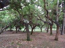 弯曲的结构树 免版税库存图片