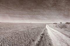 弯曲路的领域和Cural在以色列 库存照片