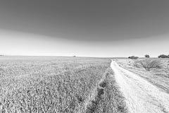 弯曲路的领域和Cural在以色列 图库摄影