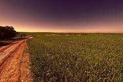 弯曲路的领域和Cural在以色列 免版税库存照片