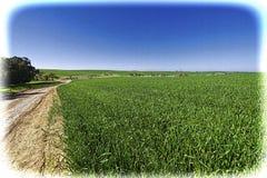 弯曲路的领域和Cural在以色列 免版税库存图片