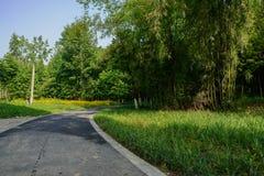 弯曲路面在晴朗的夏天早晨遮荫森林  库存照片