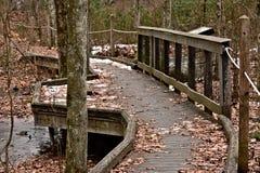 弯曲通过森林的走道 库存图片