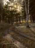 弯曲道路在一个混杂的森林里 免版税库存照片